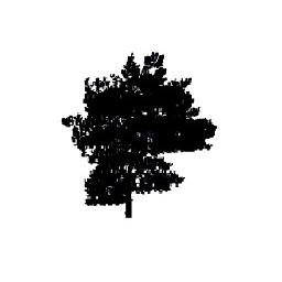 Tree 14